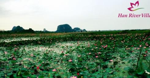 Khu đô thị Nam Hòa Xuân